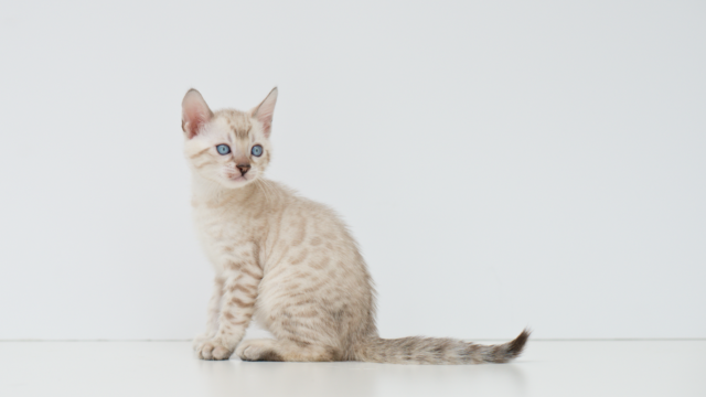 x4 Kittens