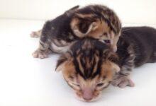 Harriets kittens